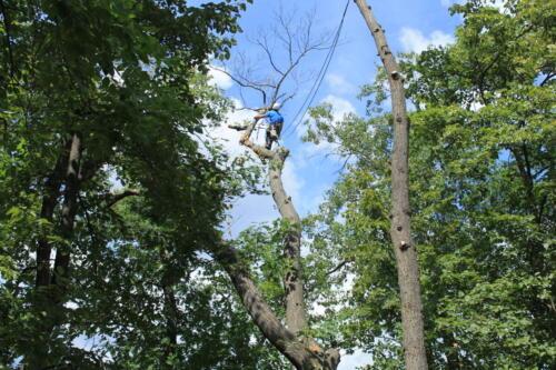 07-08-2013-tree-work-055