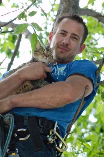 cat-in-tree-pic